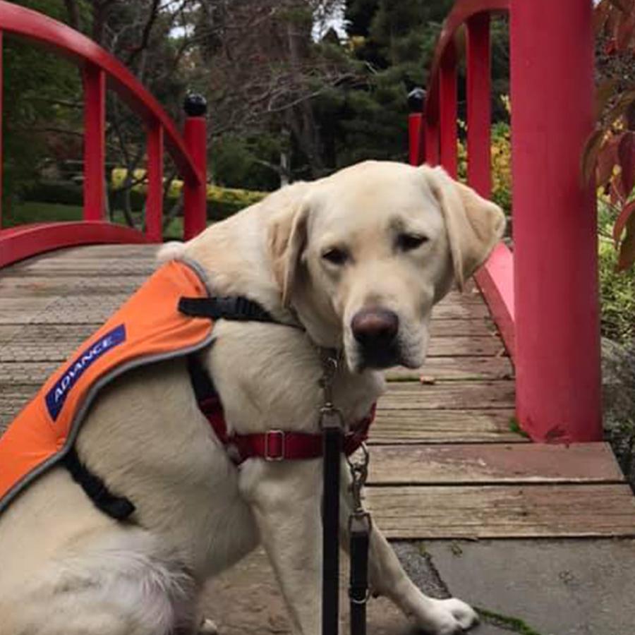 dog on a foot bridge