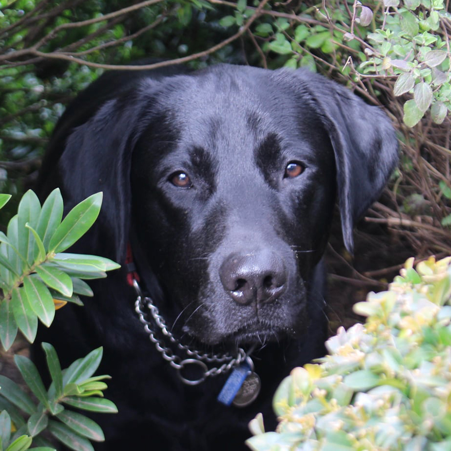 dog in some bushes