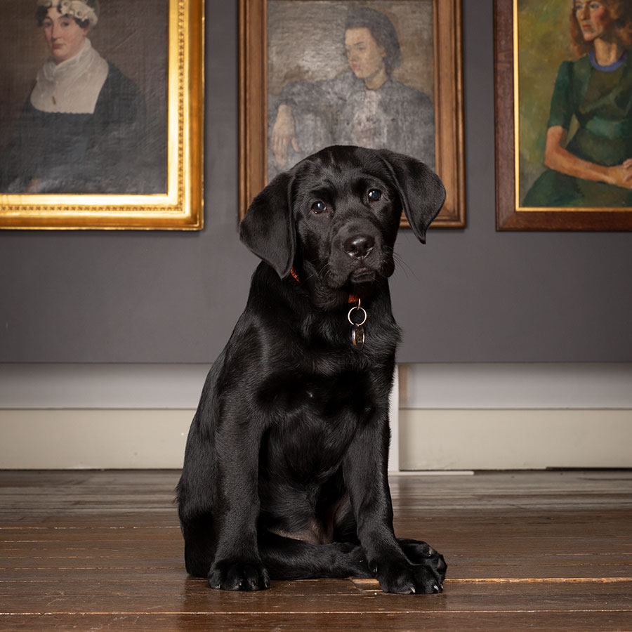black puppy sitting in front of framed portraits
