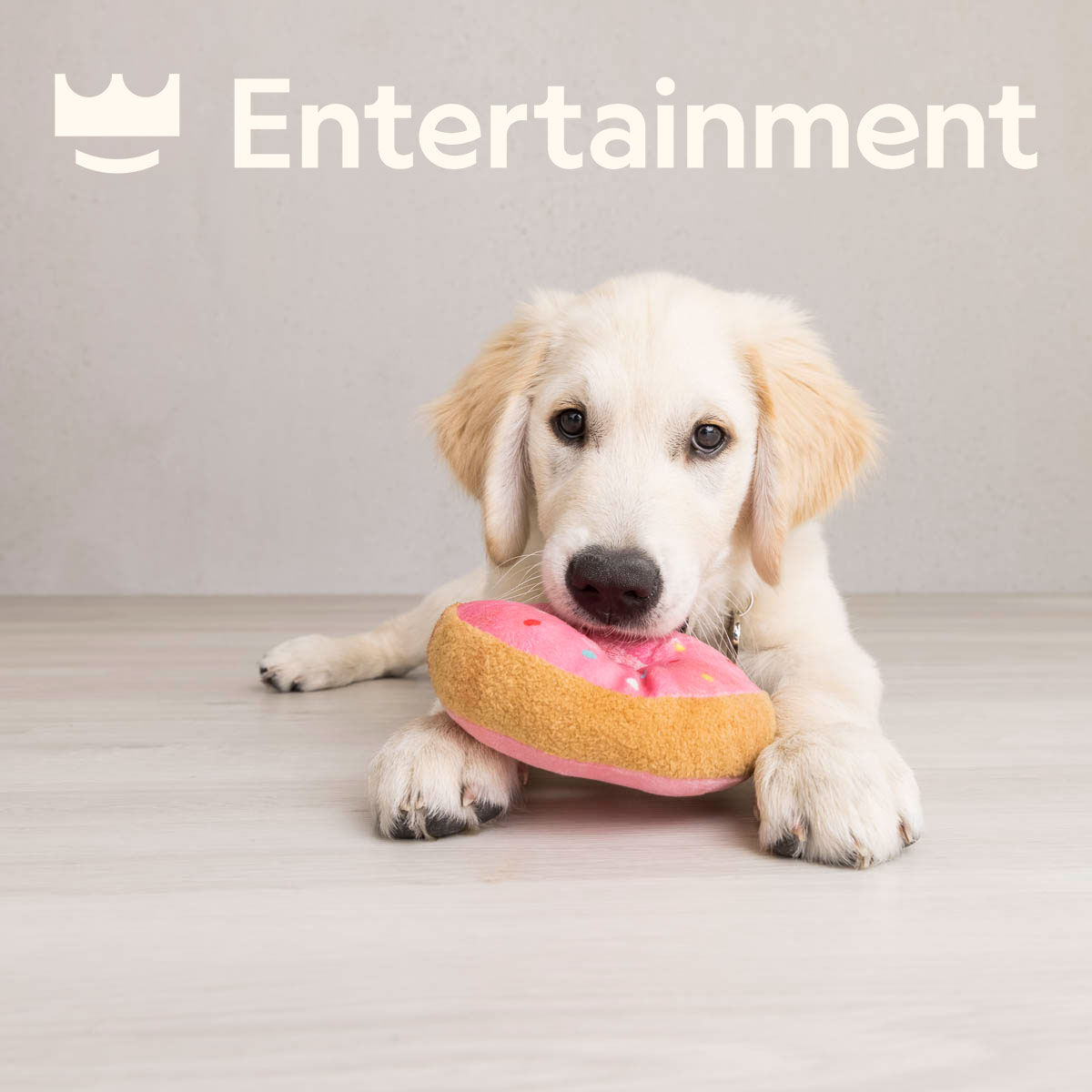 puppy with a toy doughnut