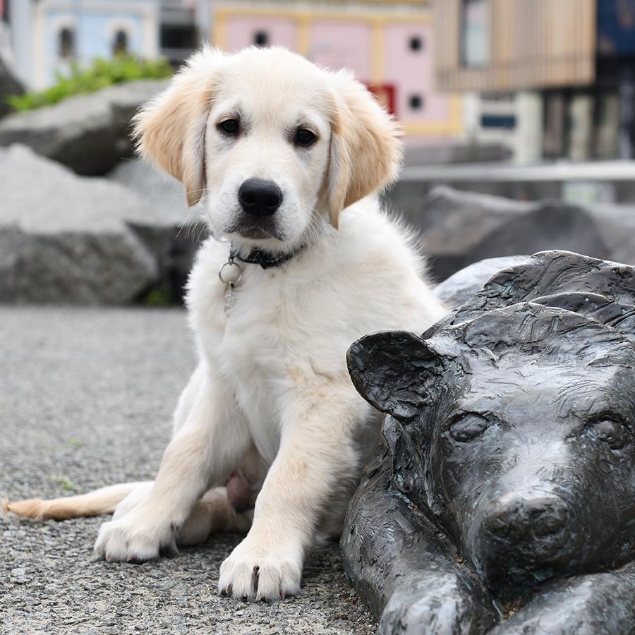 puppy sitting near a metal dog statue