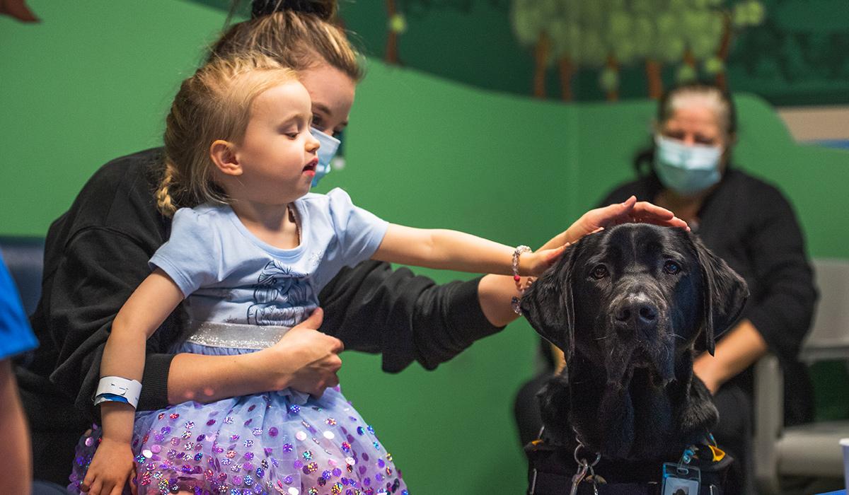 little girl patting dog